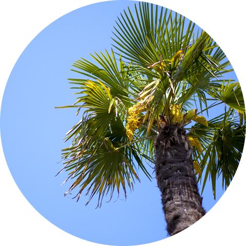 社会福祉法人多摩棕櫚亭協会の理念