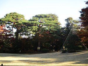 11.29殿ヶ谷戸庭園④