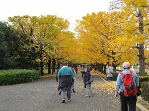 11.15昭和記念公園①